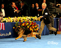 "German Shepherd Dog GCH CH Babheim's Captain Crunch (Capi) with James ""Jimmy"" Moses"