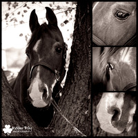 Senior Horse Photography Project 2016