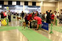 PROOFS Granite City Kennel Club Dog Show New Gallery 12-Dec-15