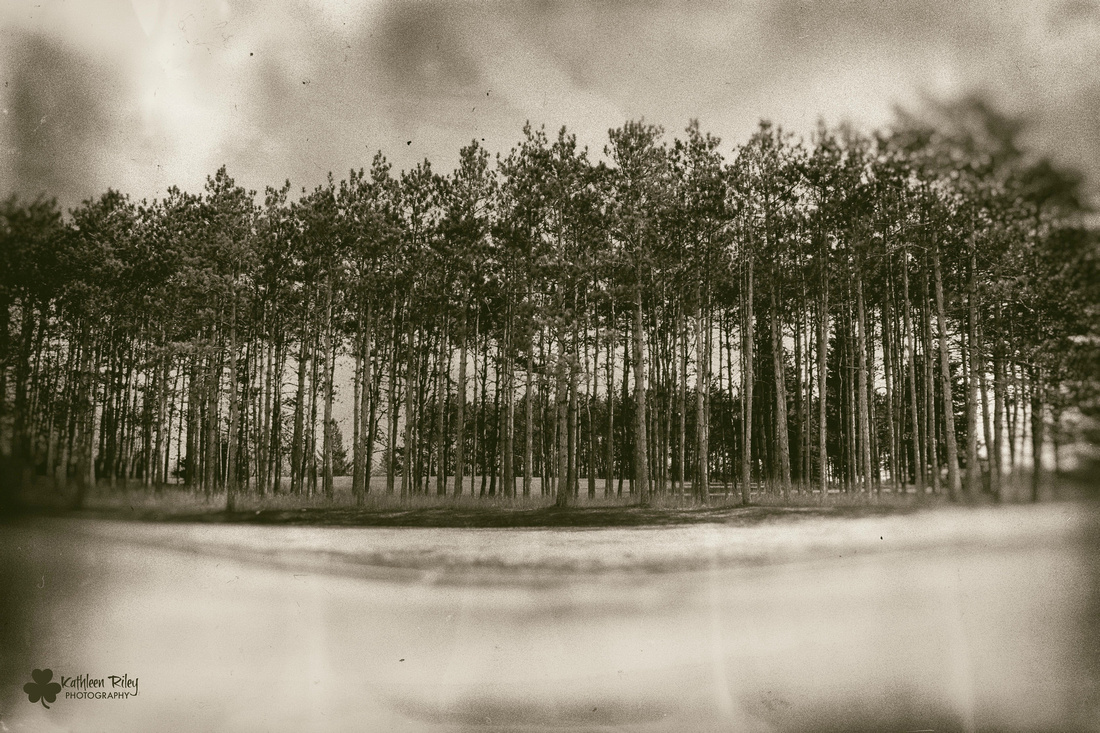 Glen Lake Sanatorium Pine Trees done in wet plate treatment by Kathleen Riley Photography,