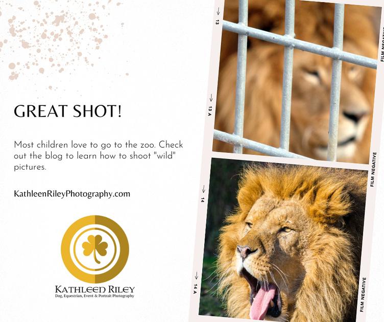 great shot! zoo photos