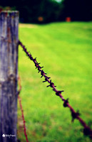 Barbed wire fence on an aged gray post in Jordan Minnesota