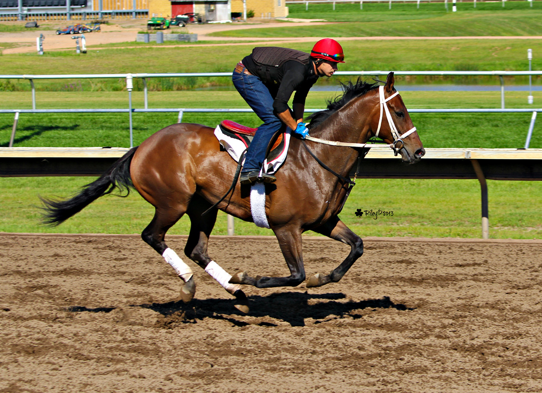 Thoroughbred Morning Exercise at Canterbury Park in Shakopee Minnesota Clay Fullerton in the irons