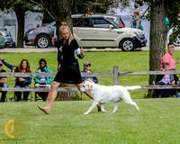 2020 Dog Shows and Events